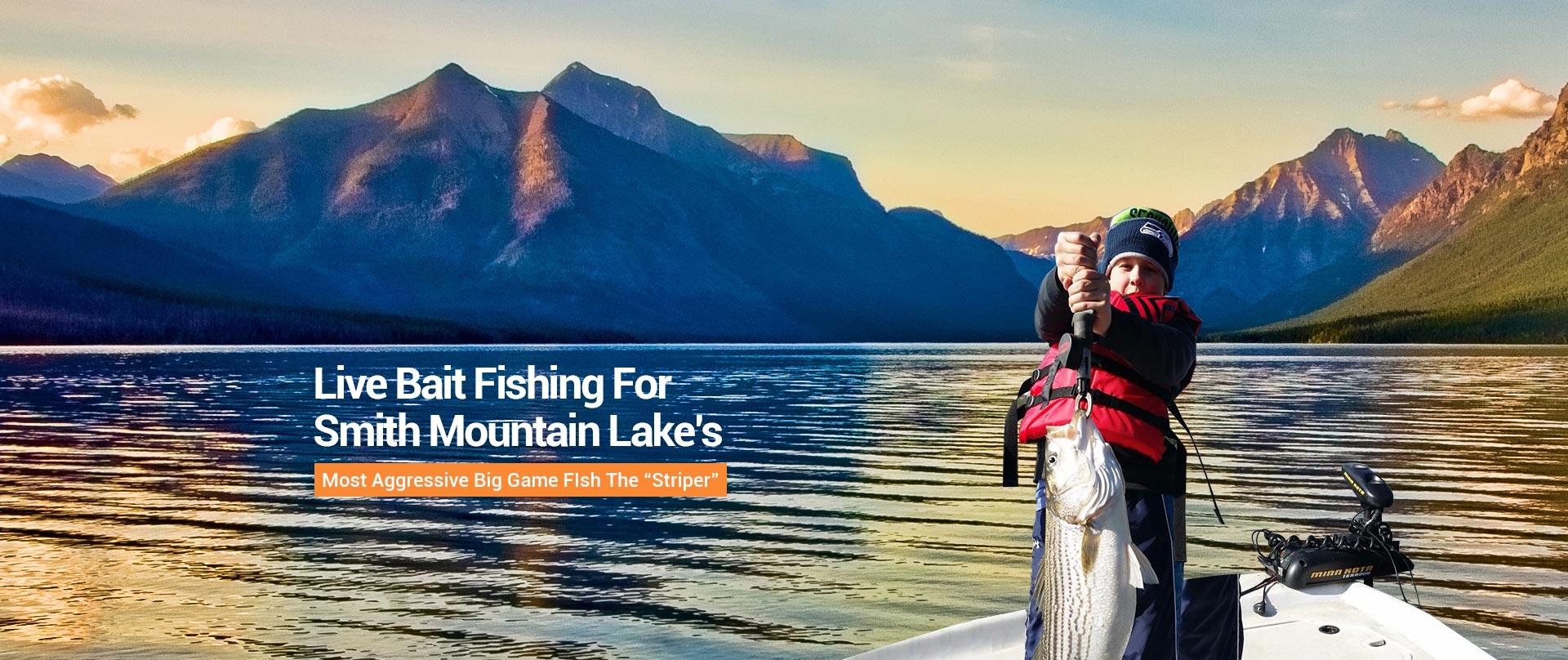 Striper fishing guide service on smith mountain lake va for Smith mountain lake striper fishing